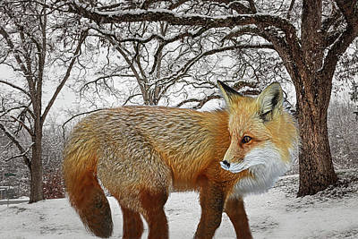 Photograph - Foxy Radiance In The Woods by Debra and Dave Vanderlaan