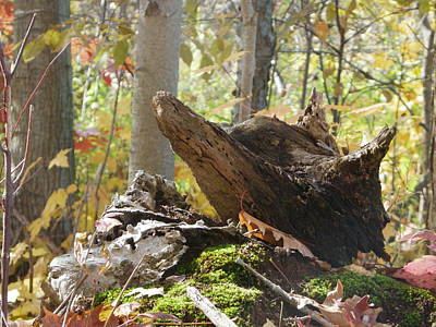 Photograph - Foxy Stump by Peggy King