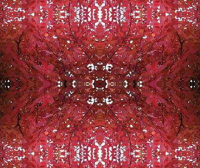Photograph - Fractal A Version 2 From Tree Photo 799 On Side by Julia Woodman