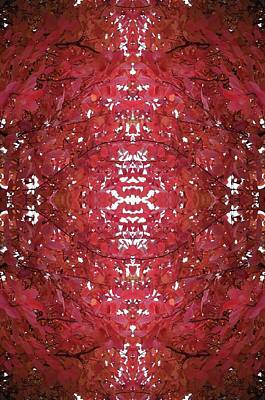 Photograph - Fractal B Version 1 From Tree Photo 799 by Julia Woodman