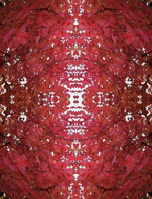 Photograph - Fractal B Version 3 From Tree Photo 799  by Julia Woodman
