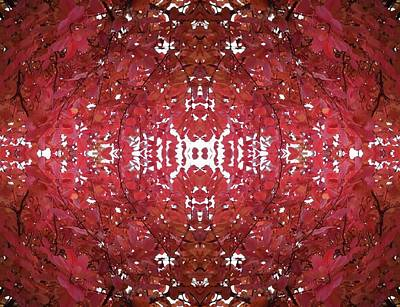 Photograph - Fractal B Version 3 From Tree Photo 799 On Its Side by Julia Woodman