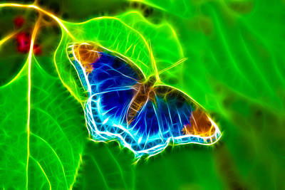 Fractal Butterfly Art Print by Rich Leighton