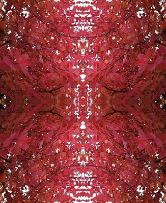 Photograph - Fractal C  From Tree Photo 799 by Julia Woodman