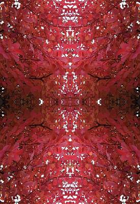 Photograph - Fractal Ca From Tree Photo 799 by Julia Woodman