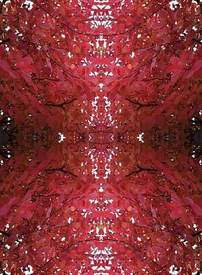 Photograph - Fractal Cb From Tree Photo 799 by Julia Woodman