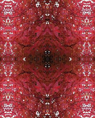 Photograph - Fractal D Version 1 From Tree Photo 799 by Julia Woodman