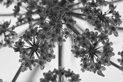 Fractal Flower Photoset 02 Art Print