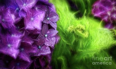 Photograph - Fractals And Flowers by Cameron Wood