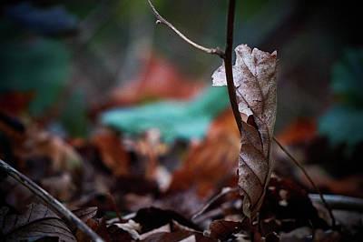 Photograph - Fragile by Andreas Gerden