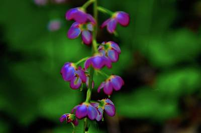 Photograph - Fragile Flower by Joe Burns