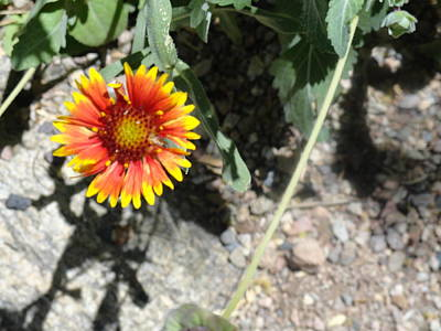 Photograph - Fragile Floral Life On The Trail by Mozelle Beigel Martin