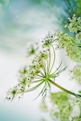 Flora Photograph - Fragile by Nailia Schwarz