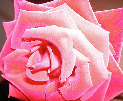 Art Print featuring the photograph Fragrant Rose by Marie Hicks