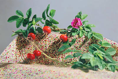Photograph - Fragrant Rugosa Rose With Rosehips And Leaves by Nancy Lee Moran