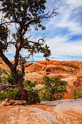 Pine Tree Photograph - Framed Arch by Chad Dutson