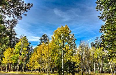 Photograph - Framed Aspen Grove by Robert Bales