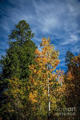 Gravel Road Photograph - Framed Aspen by Robert Bales