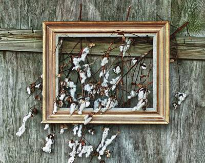 Framed Cotton Original by Michael Thomas