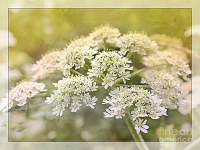 Keck Photograph - Framed Cow Parsley by Nick Eagles