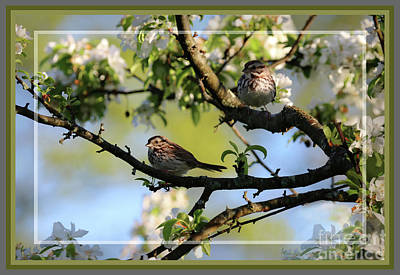 Photograph - Framed Finches In Spring by Sandra Huston