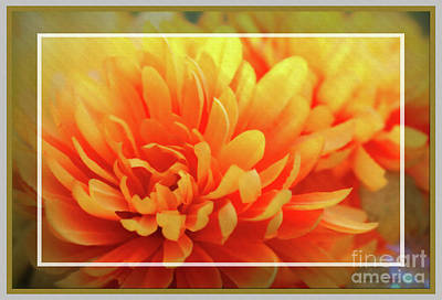 Photograph - Framed Floral Delight by Sandra Huston