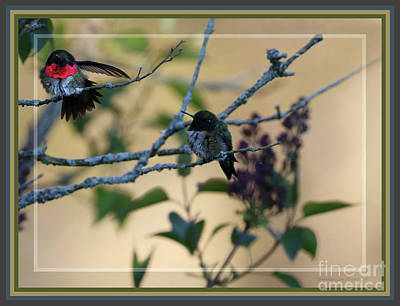 Photograph - Framed Hummingbird Delight by Sandra Huston