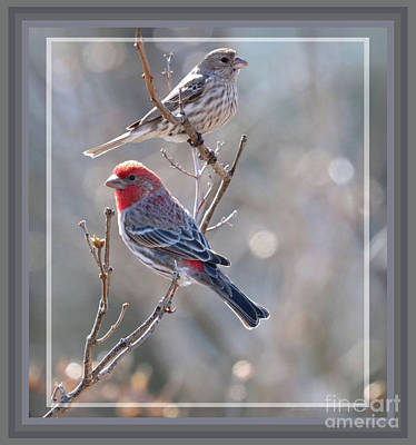 Photograph - Framed Pair Of House Finches by Sandra Huston