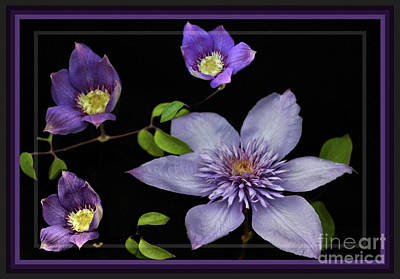 Photograph - Framed Purple Clematis by Sandra Huston