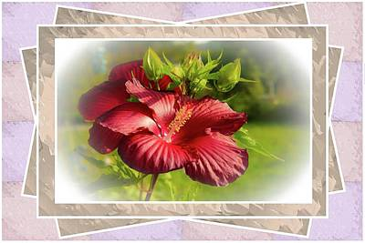 Photograph - Framed Red Hibiscus by Sherman Perry