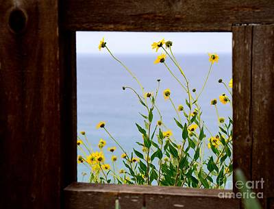 Photograph - Framed Sunflowers by Johanne Peale