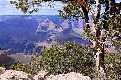 Framed View - Grand Canyon Art Print by Larry Ricker