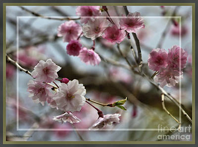 Photograph - Framed Weeping Cherry Tree by Sandra Huston