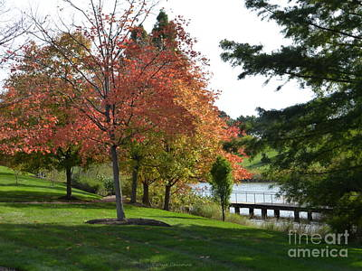 Photograph - Framing The Lake by Kathie Chicoine