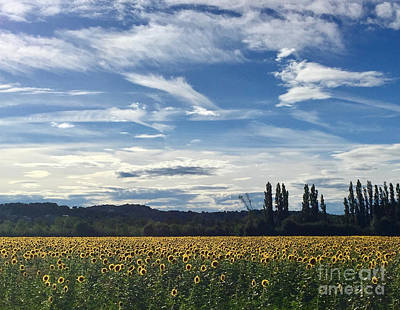 Photograph - Sunflowers In Avignon by Christopher Plummer