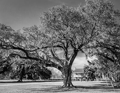 Photograph - Frances Antebellum Home Bw by Gregory Daley  PPSA
