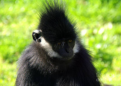 Photograph - Francois Langur by Lisa L Silva