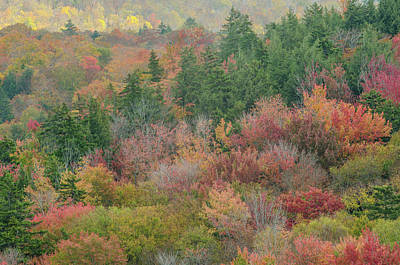 Photograph - Franconia Foliage by Mike Ste Marie