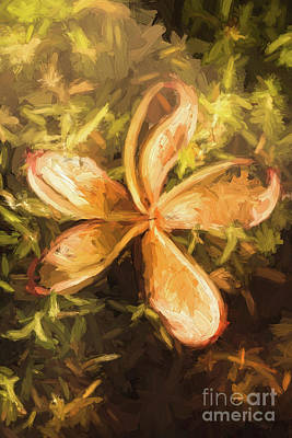 Digital Art - Frangipani Digital Painting by Jorgo Photography - Wall Art Gallery