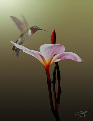 Digital Art - Frangipani Flower And Hummingbird by IM Spadecaller