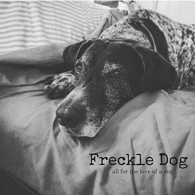 Photograph - Freckle Dog by Janis Kirstein