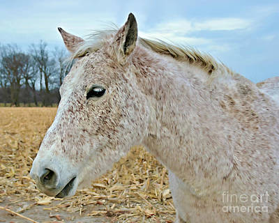 Photograph - Freckles by Kathy M Krause