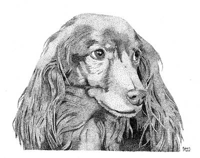 Dachshund Drawing - Fred by Robert Morin