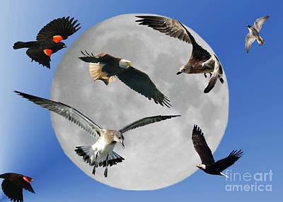 Free As A Bird Art Print