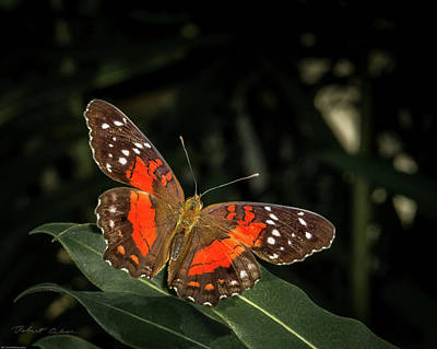 Photograph - Free As A Butterfly by Robert Culver