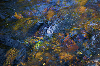 Photograph - Free Fall by Patricia Dennis