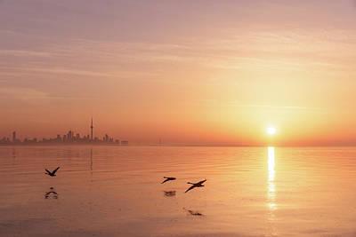 Photograph - Free Flight Daybreak by Georgia Mizuleva