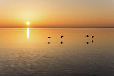 Photograph - Free Flight - Sunrise Birds Quartet Over Water by Georgia Mizuleva
