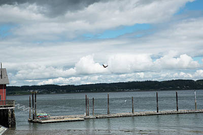 Photograph - Free Flight by Tom Cochran