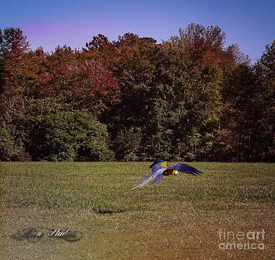 Photograph - Free Flighted Macaw by Melissa Messick